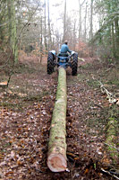 Trusty Fordson used to extract felled larch